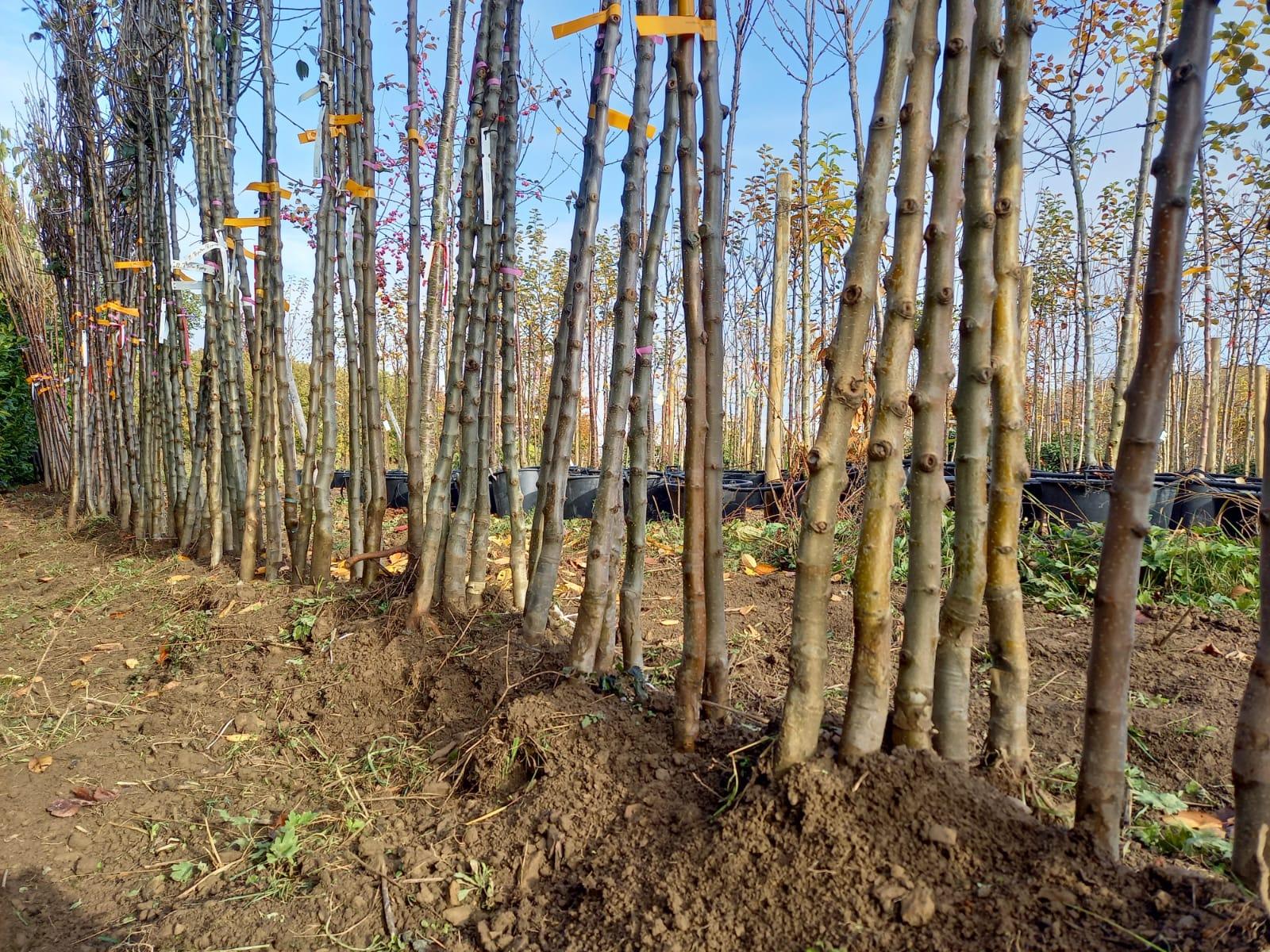 Plückebaum Gartenbau